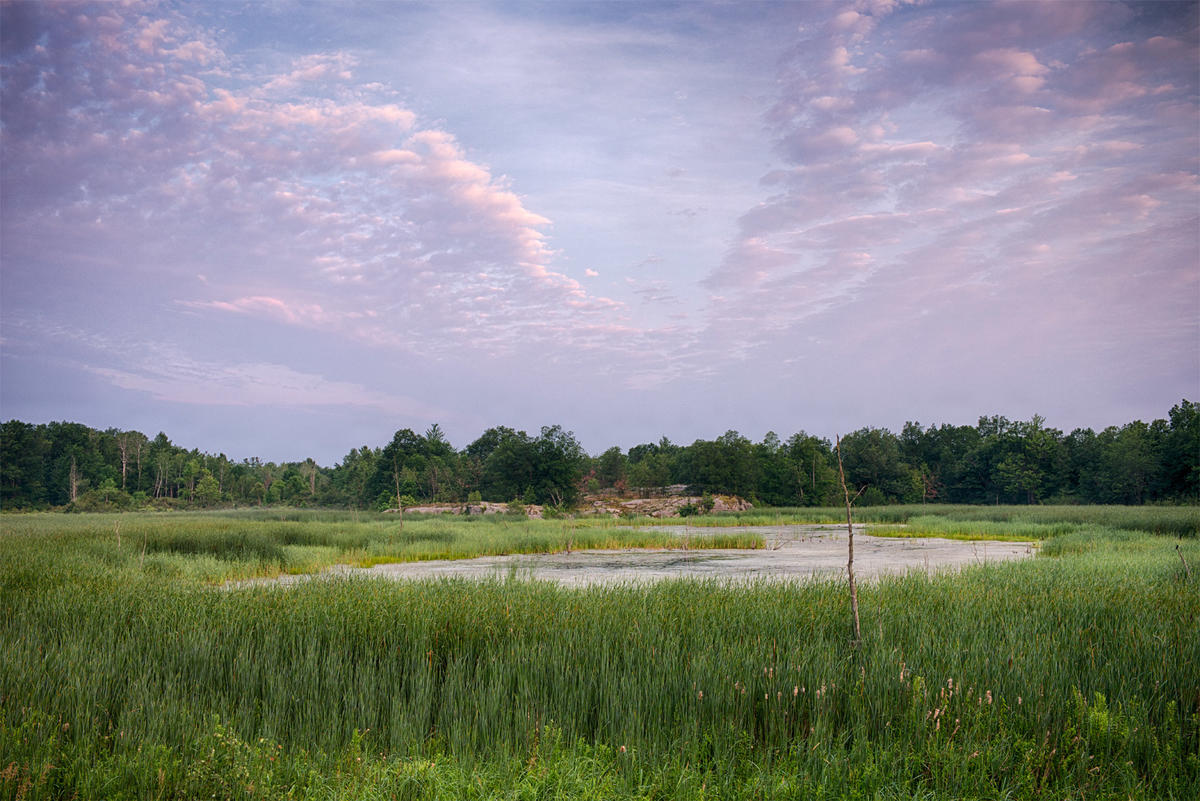 View of beautiful blue and lavender sky over green marsh