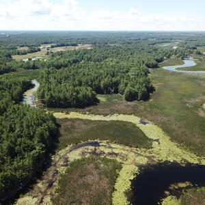 Wetlands on Wilton property adding to Crooked Creek Preserve
